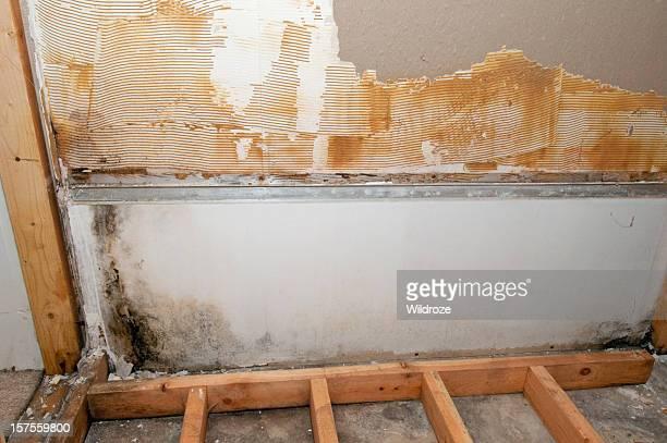 Schimmel wächst im Untergeschoss Badezimmer