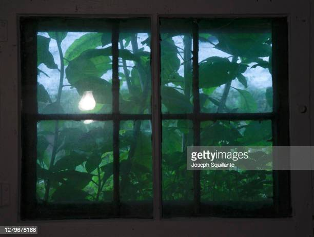 basement window with leaves and lightbulb - joseph squillante stock pictures, royalty-free photos & images