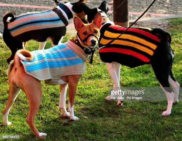 Basenji dogs arrive for Crufts 2009 at Birmingham's National Exhibition Centre