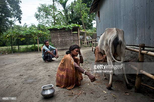 Bash Kata Indian enclave residents milk their cows July 9 2015 in Lalmonirhat District Bangladesh The India Bangladesh enclaves also known as the...