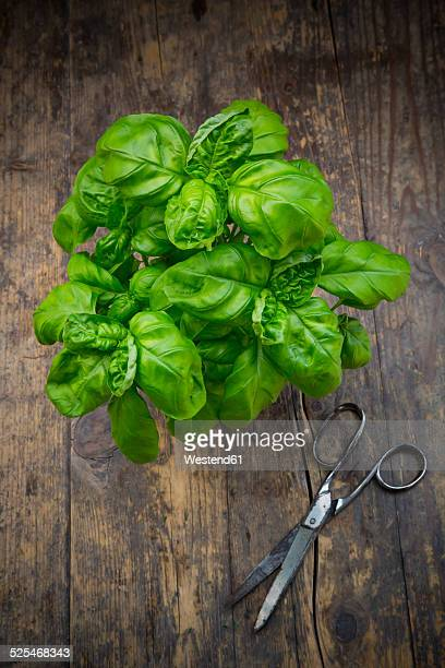 Basil and scissors