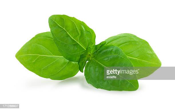basil fresh - basil stock pictures, royalty-free photos & images