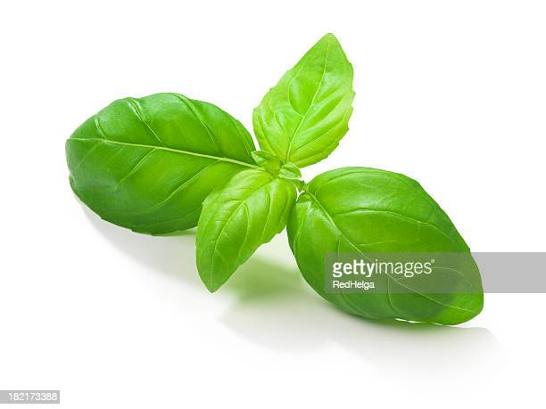 basil leafs - basil stock pictures, royalty-free photos & images