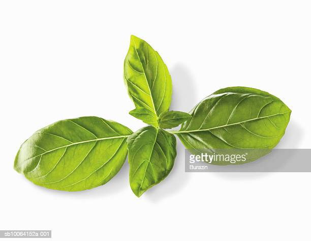 Basil leaves (Ocimum basilicum) on white background, close-up, studio shot