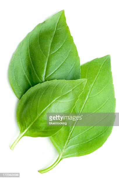 basil leaves - basil stock pictures, royalty-free photos & images