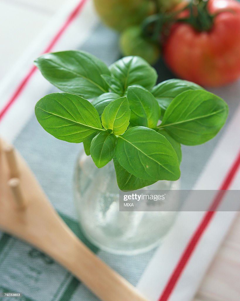 Basil : Stock Photo
