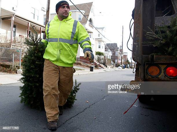 Basil Rigano of Malden carries a christmas tree to the recycle truck in Roxbury on December 30 2013