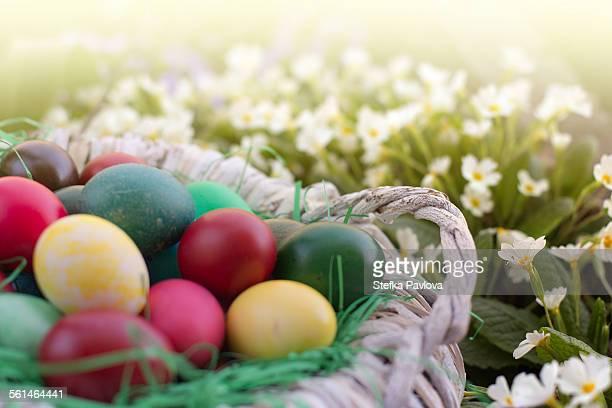 Basket full of Easter eggs in white flowers