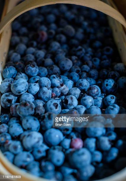 a basket full of ripe juicy summer blueberries - bleu marine photos et images de collection