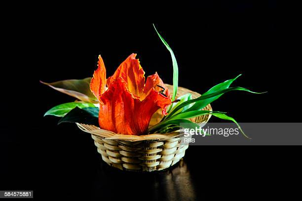 A Basket of African Tulips