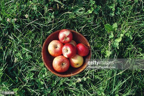 Basket of apples, high angle view