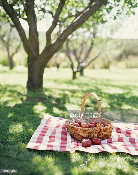 Basket of Apples in Orchard