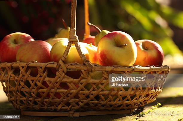 basket of apples - jill harrison stock pictures, royalty-free photos & images