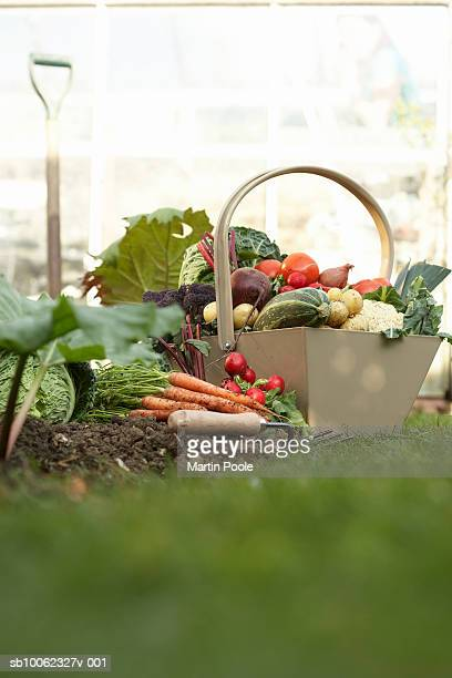 Basket of assorted vegetables in field