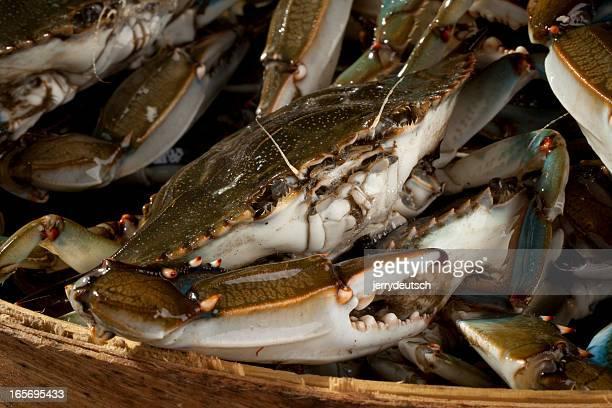 Basket of Blue Crabs