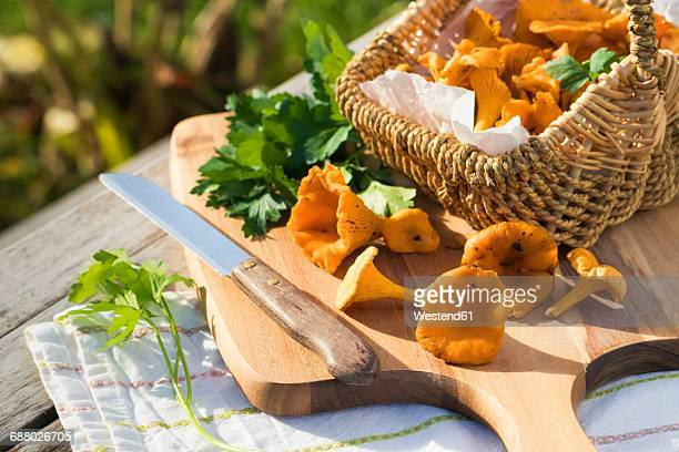 Basket of Chanterelles and flat leaf parsley