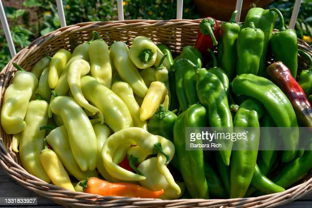 basket of colorful peppers freshly harvested from the garden ready for market - anaheim california stock pictures, royalty-free photos & images