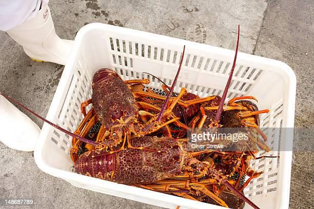 Basket of crayfish.