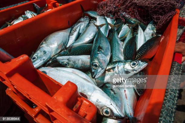 basket of fish - perch fish stock pictures, royalty-free photos & images