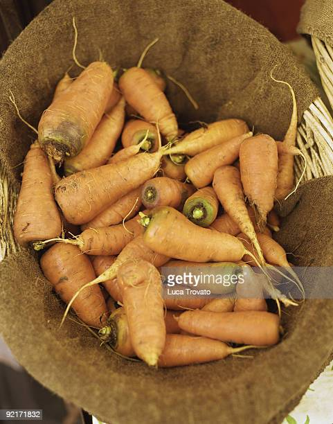 Basket of fresh carrots