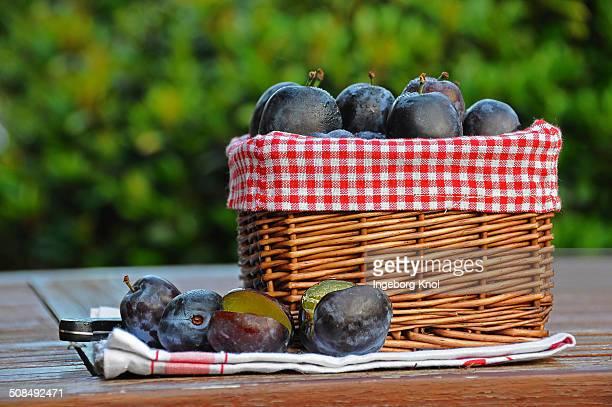 Basket of fresh plums