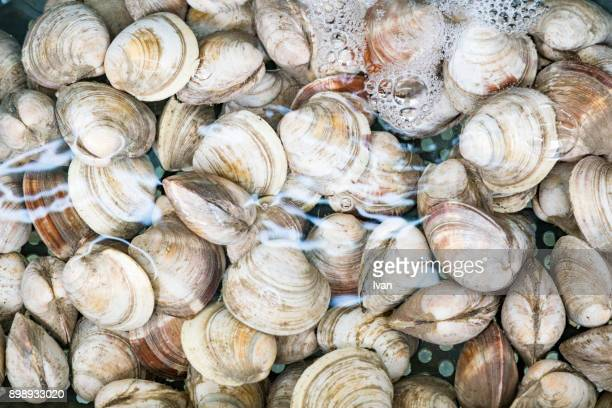 basket of fresh raw clams, shellfish - clams stock photos and pictures