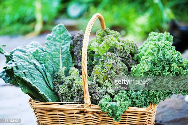 basket of freshly harvested kale vegetable varieties close-up - kale stock pictures, royalty-free photos & images