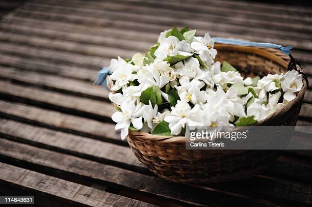 basket of jasmine - jasmine flower stock pictures, royalty-free photos & images