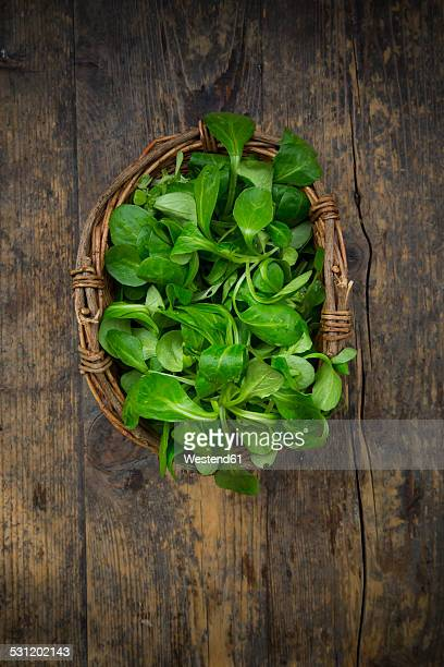 Basket of lambs lettuce, Valerianella locusta, on wood