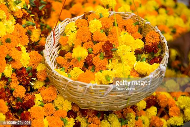 Basket of Marigold flower heads