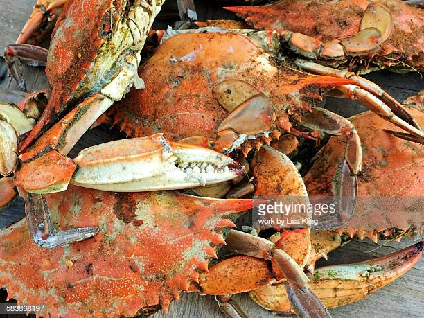 basket of maryland blue crabs - maryland blue crab stock photos and pictures