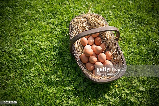 Basket of organic eggs