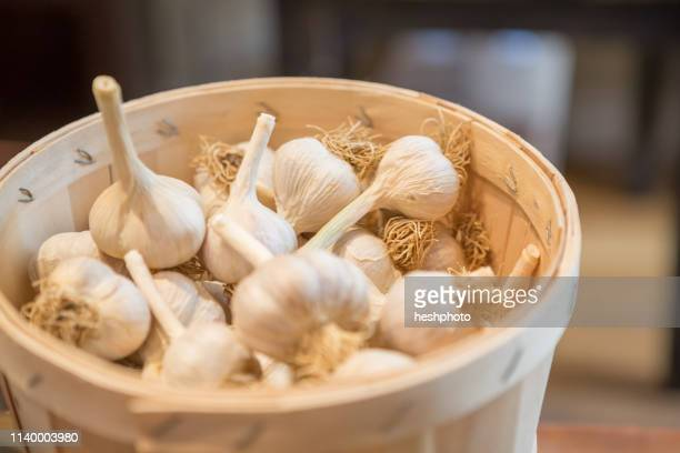 basket of organic garlic bulbs - heshphoto stock pictures, royalty-free photos & images