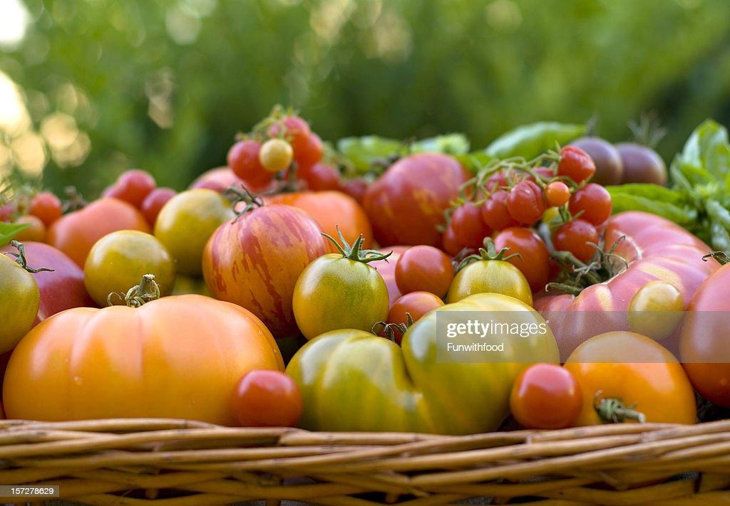 panier de produits bio t labor r colte de l gumes de tomates lancienne photo getty images. Black Bedroom Furniture Sets. Home Design Ideas
