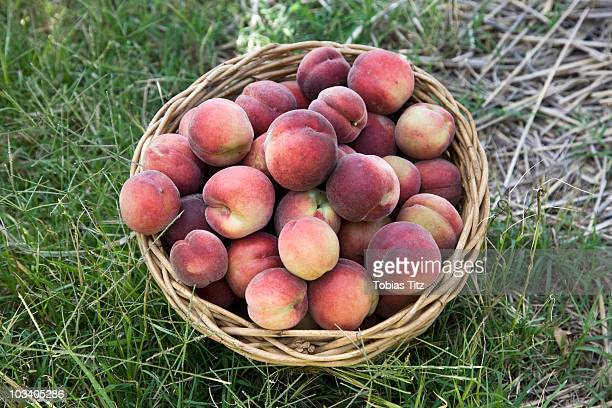 A basket of peaches on the ground