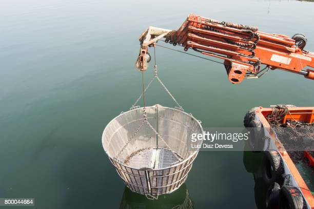 basket of steel and mobile crane of the ship - cozza zebrata foto e immagini stock
