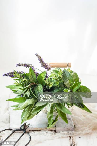 basket of variuos fresh herbs - herb stock pictures, royalty-free photos & images