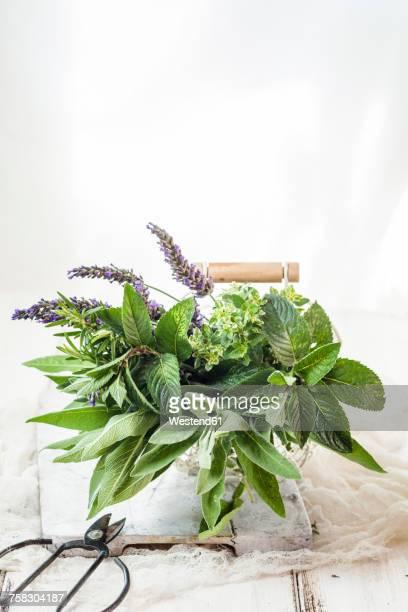 basket of variuos fresh herbs - kräuter stock-fotos und bilder