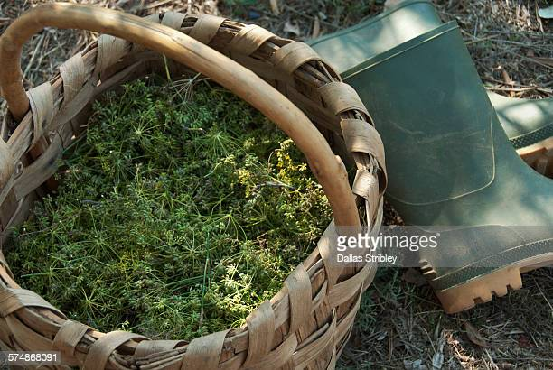 Basket of wild fennel seeds, and gumboots