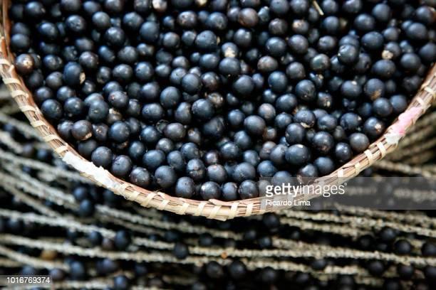 basket with acai fruit (euterpe oleracea)in amazon region, brazil - acai stock pictures, royalty-free photos & images