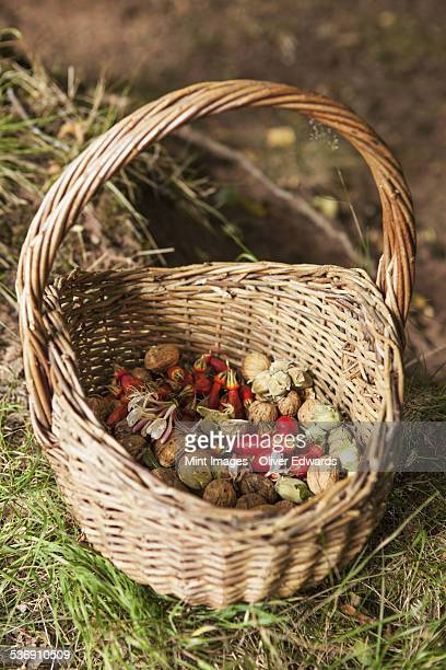 Basket with foraged food, rosehips, fruits and cobnuts.