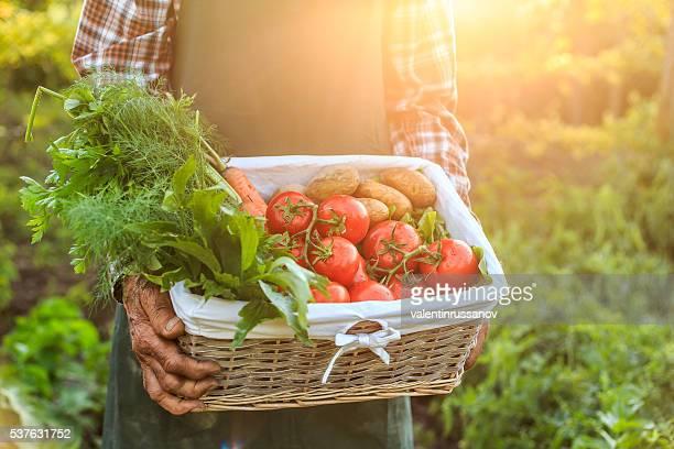 Panier avec des légumes frais