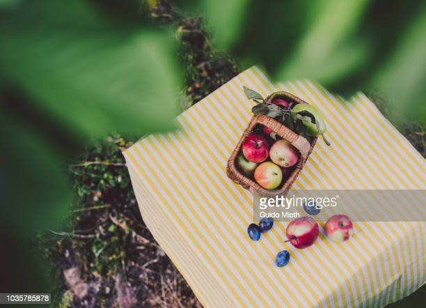 Basket with fruits under a tree.