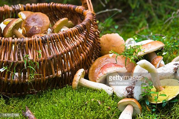 basket with mushrooms - mushrooms stock photos and pictures