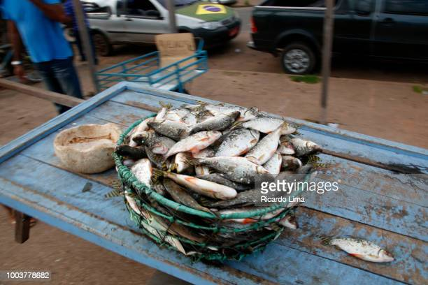 Basket With Regional Fish On The Santarem Riverside Fihs Market