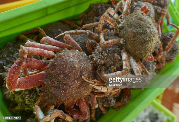 A basket with spider crabs seen inside a fish market in PortenBessin On Friday August 2 in Caen Normandy France