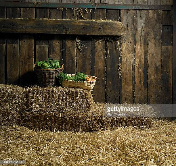 Baskets of cabbages and carrots on hay bales in barn
