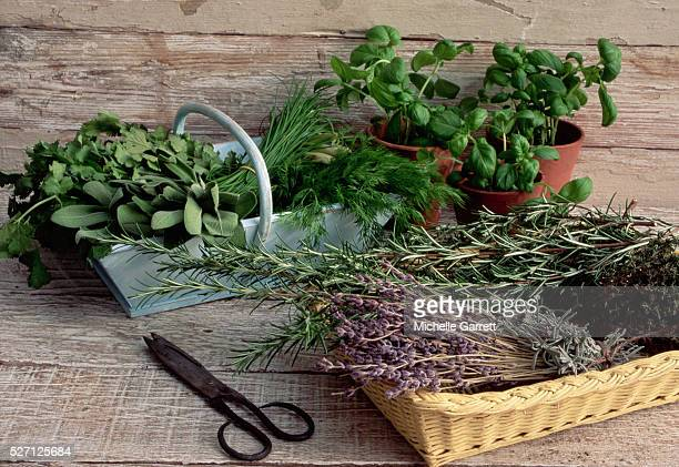 baskets of cut herbs and pots of basil - herb stock pictures, royalty-free photos & images