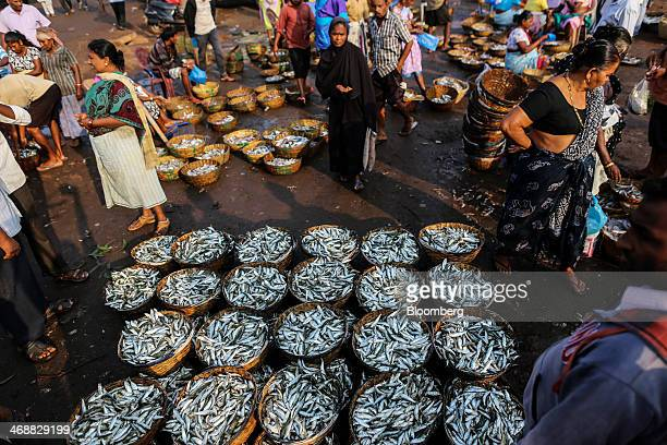 Baskets of fish are displayed for sale at the Margoa wholesale fish market in Margoa Goa India on Saturday Feb 8 2014 India's wholesale price...