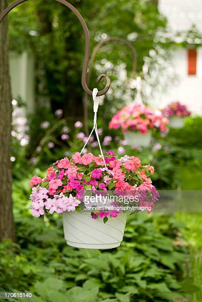 baskets of impatiens - hanging basket stock pictures, royalty-free photos & images